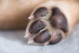 Burnt Paws 1