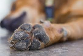 Burnt Paws 2
